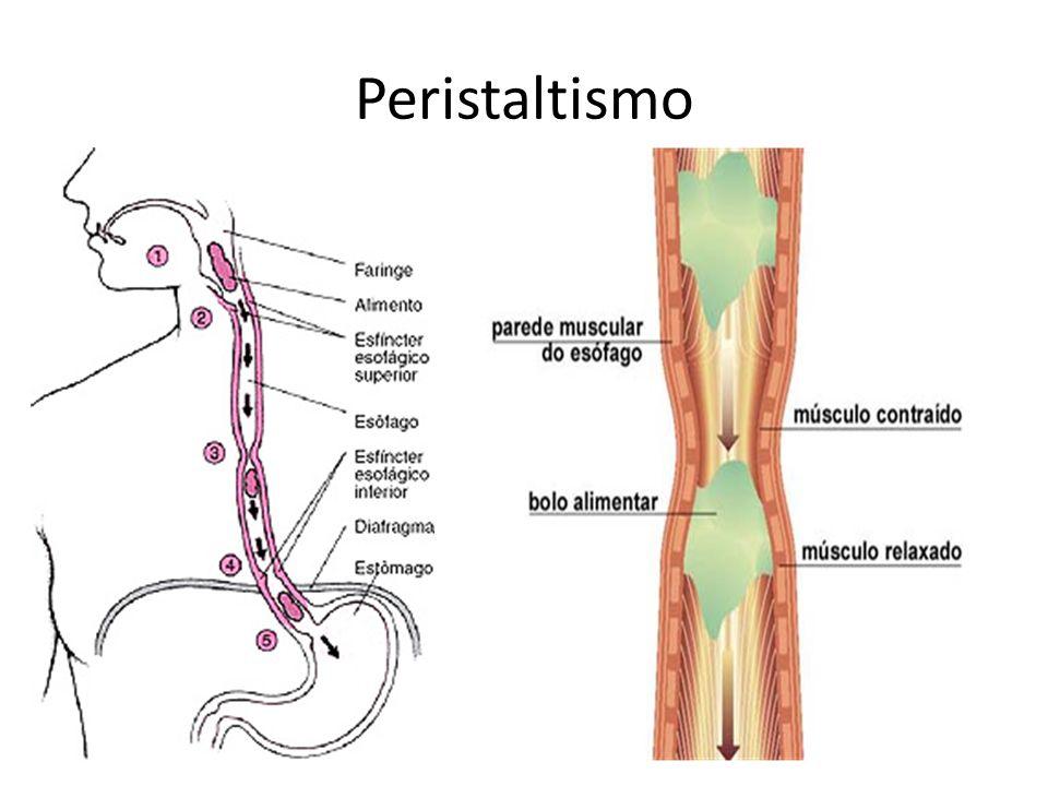 Peristaltismo