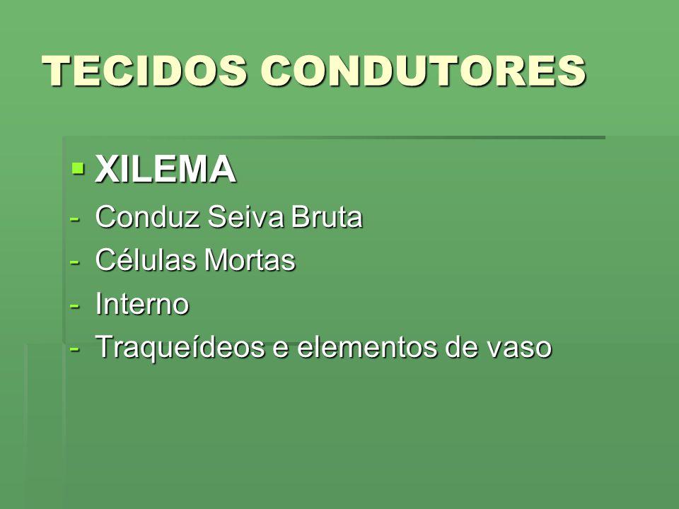 TECIDOS CONDUTORES XILEMA Conduz Seiva Bruta Células Mortas Interno