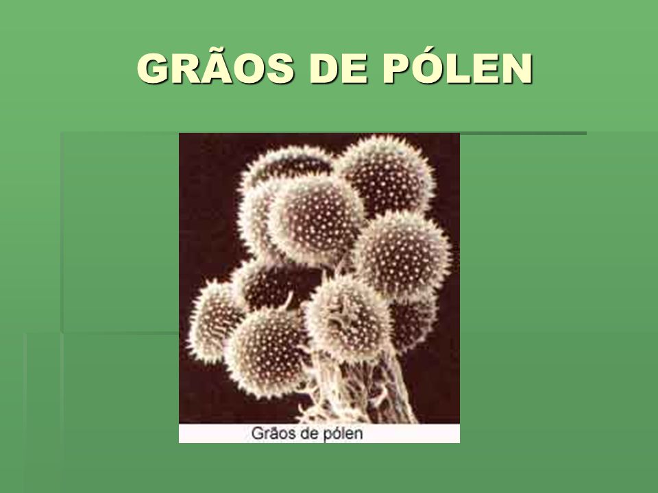 GRÃOS DE PÓLEN