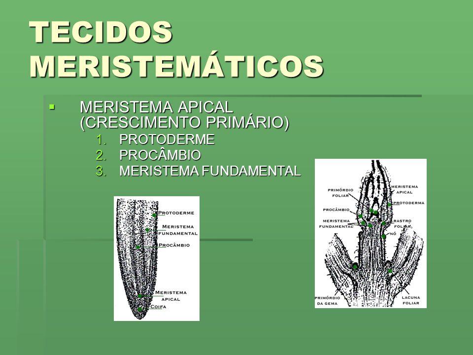 TECIDOS MERISTEMÁTICOS
