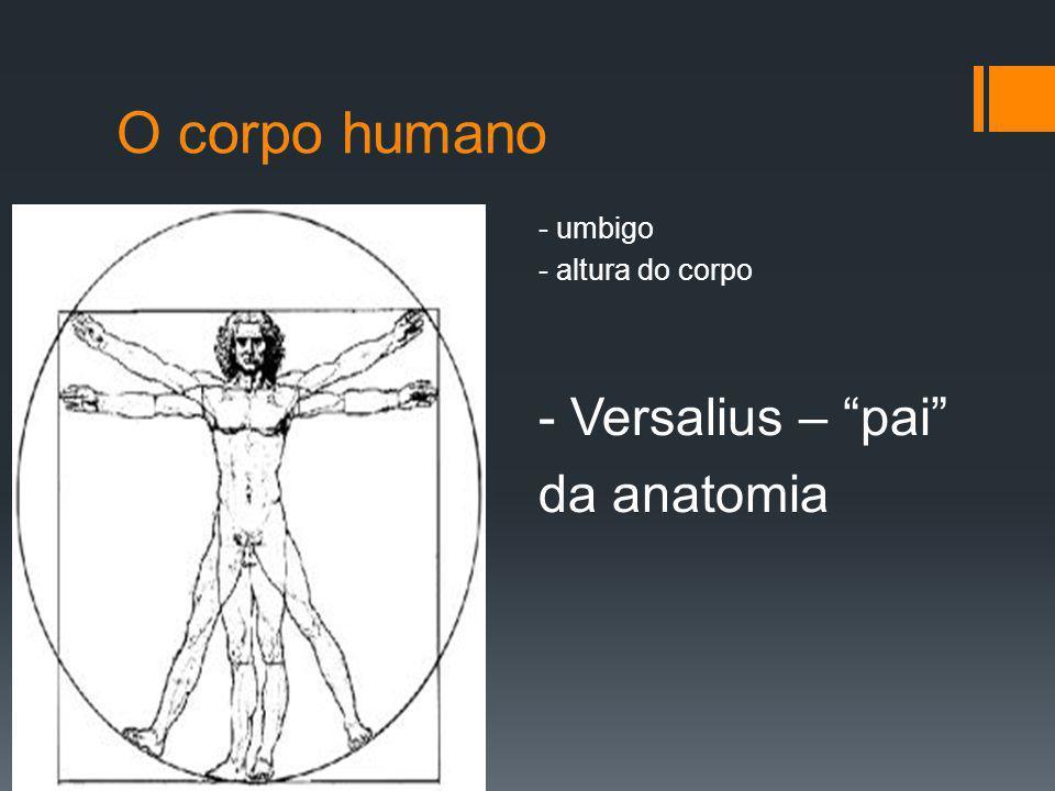 O corpo humano da anatomia - umbigo - altura do corpo
