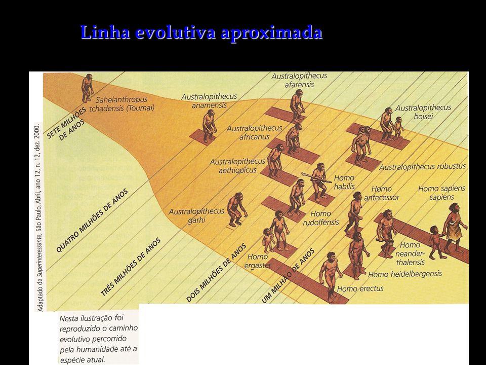 Linha evolutiva aproximada