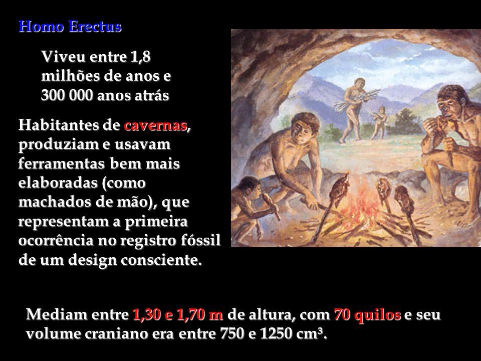 Homo Erectus Viveu entre 1,8 milhões de anos e 300 000 anos atrás.