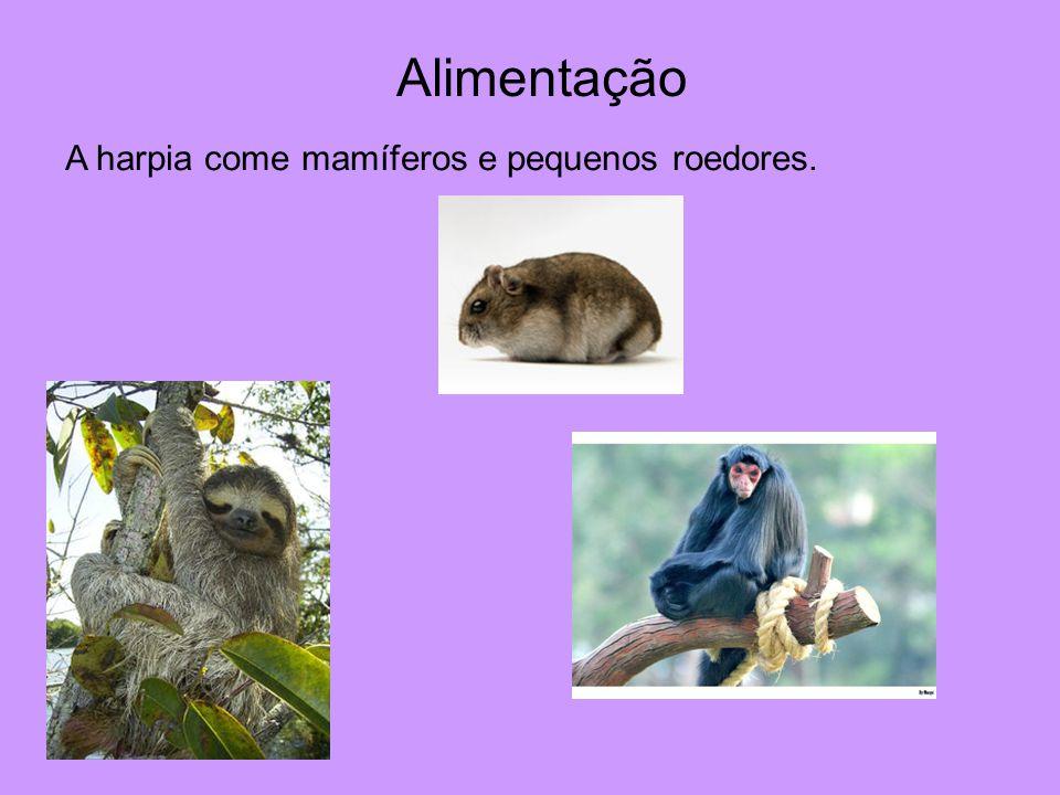 Alimentação A harpia come mamíferos e pequenos roedores.