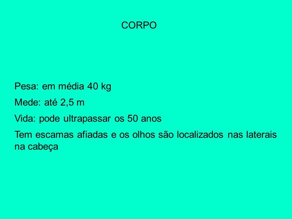 CORPO Pesa: em média 40 kg. Mede: até 2,5 m. Vida: pode ultrapassar os 50 anos.