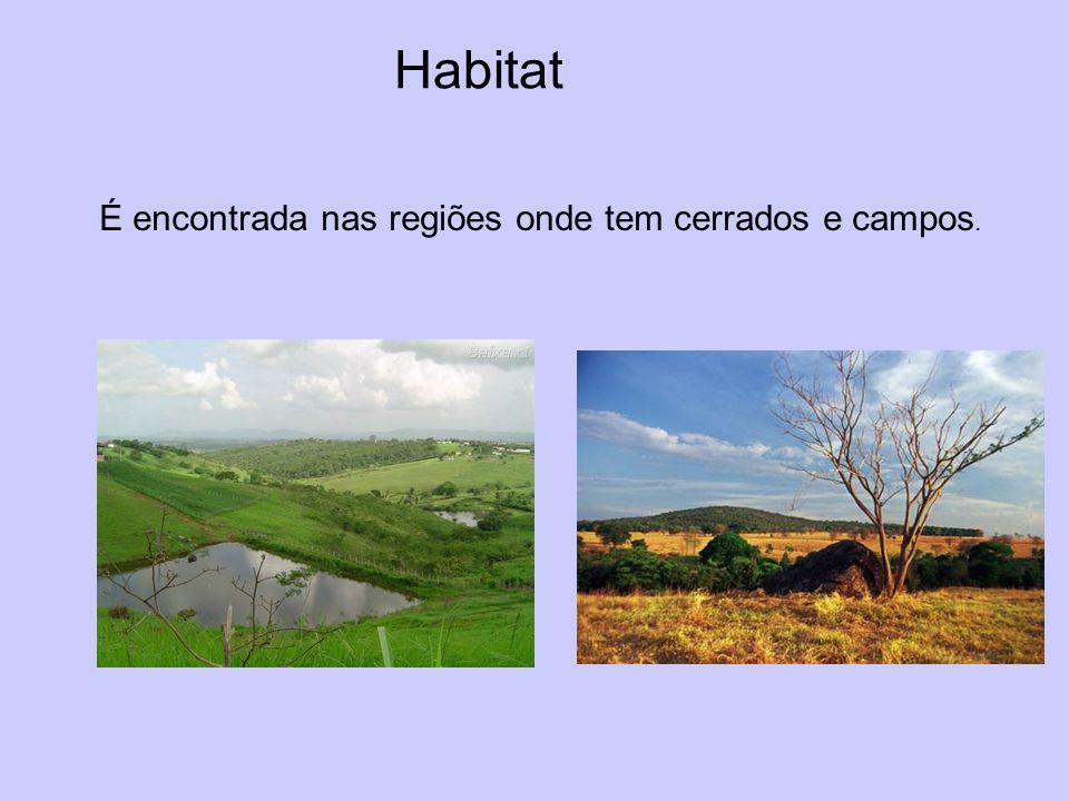 Habitat É encontrada nas regiões onde tem cerrados e campos.