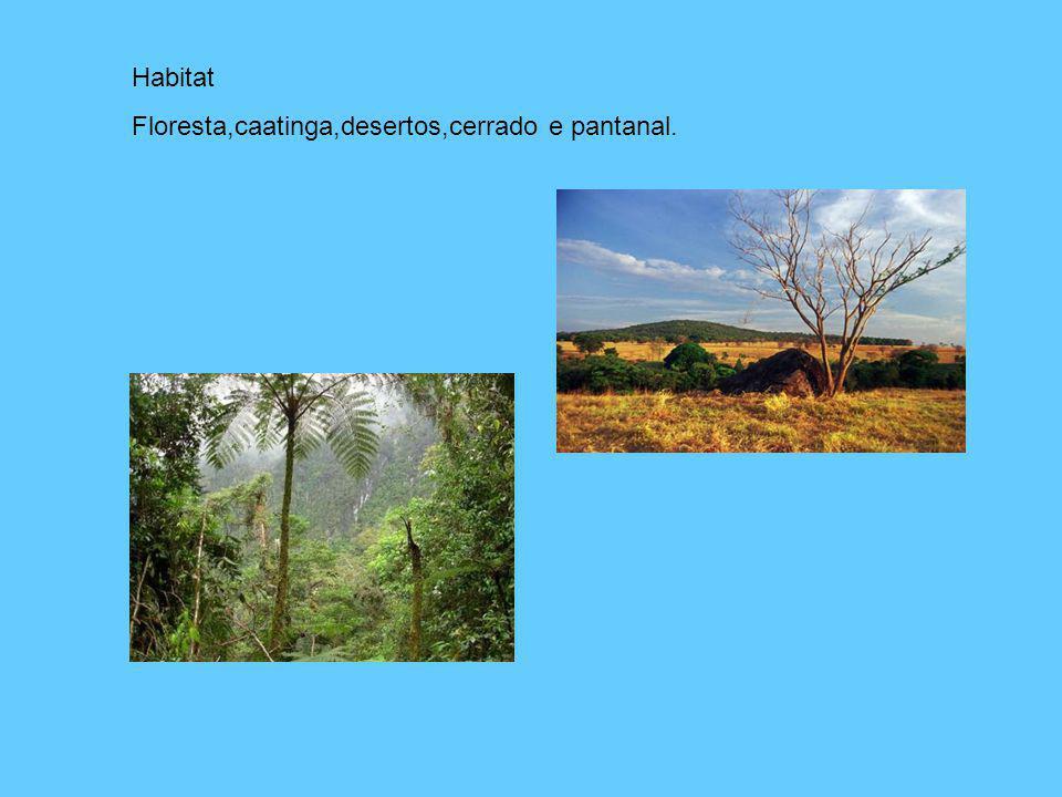 Habitat Floresta,caatinga,desertos,cerrado e pantanal.