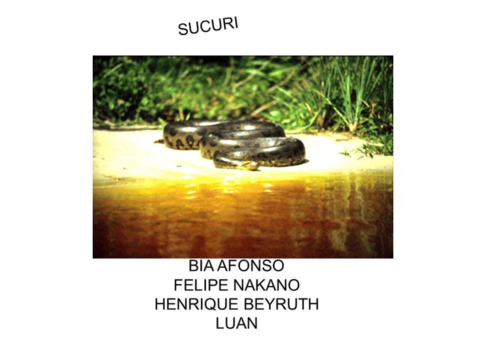 SUCURI BIA AFONSO FELIPE NAKANO HENRIQUE BEYRUTH LUAN