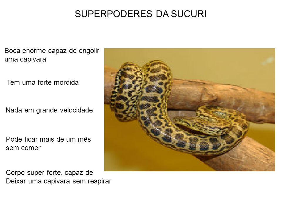 SUPERPODERES DA SUCURI