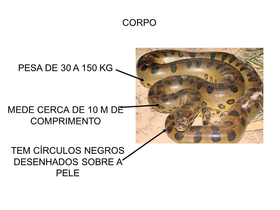 MEDE CERCA DE 10 M DE COMPRIMENTO