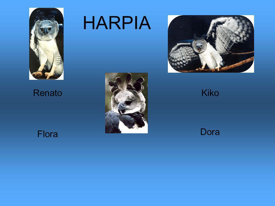 HARPIA Renato Kiko Dora Flora