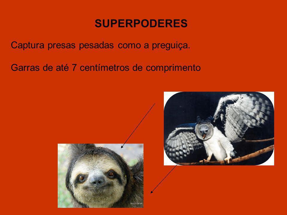 SUPERPODERES Captura presas pesadas como a preguiça.