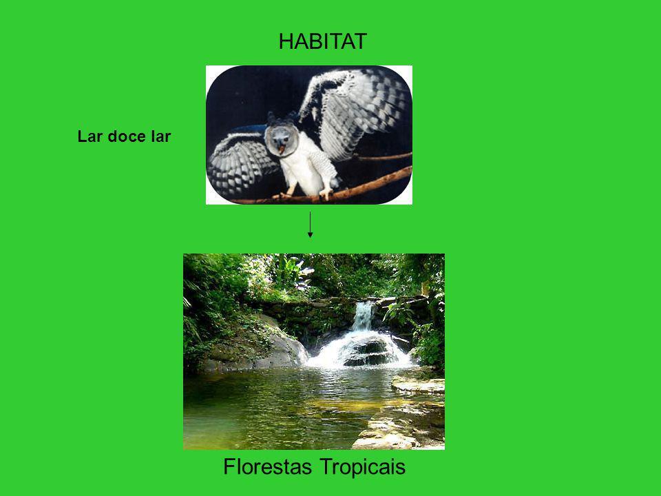 HABITAT Lar doce lar Florestas Tropicais