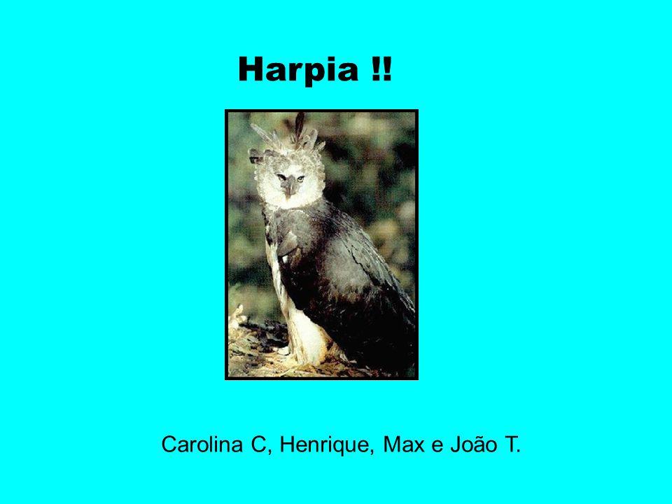 Carolina C, Henrique, Max e João T.