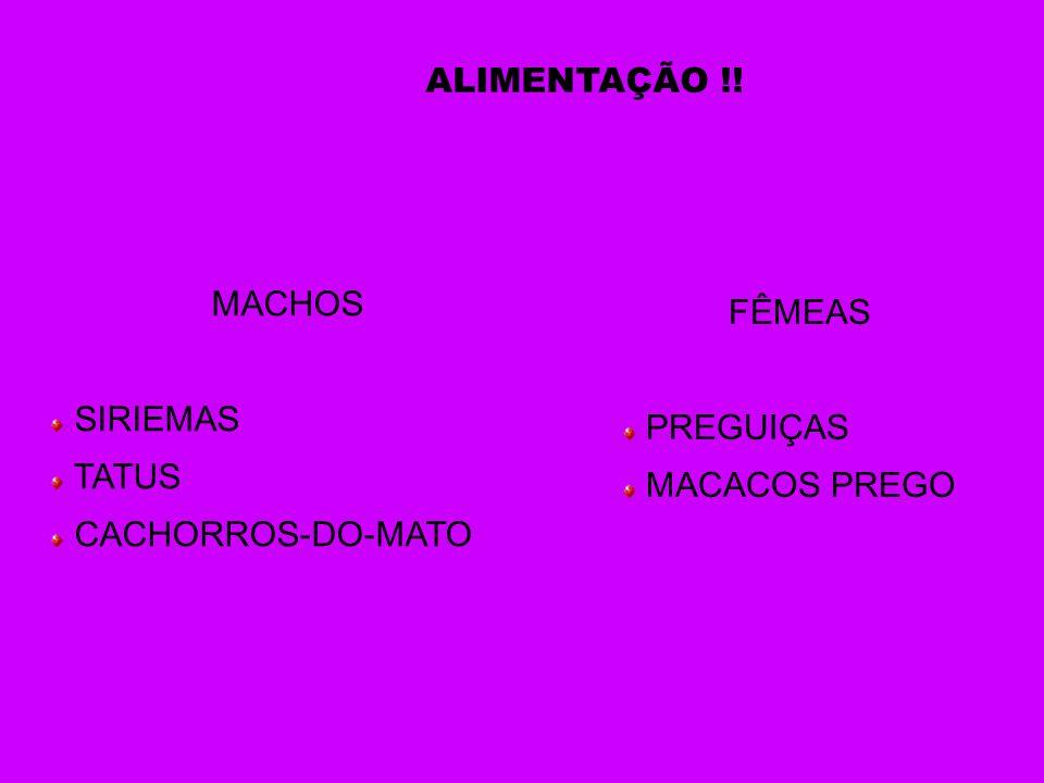 ALIMENTAÇÃO !! MACHOS SIRIEMAS TATUS CACHORROS-DO-MATO FÊMEAS PREGUIÇAS MACACOS PREGO