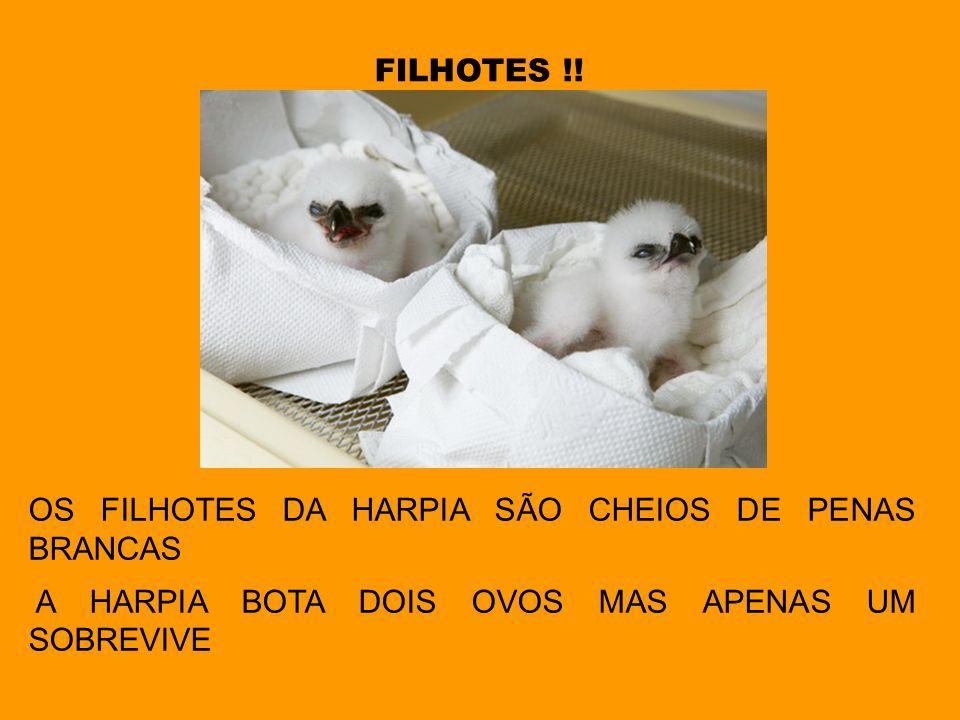 FILHOTES !. OS FILHOTES DA HARPIA SÃO CHEIOS DE PENAS BRANCAS.