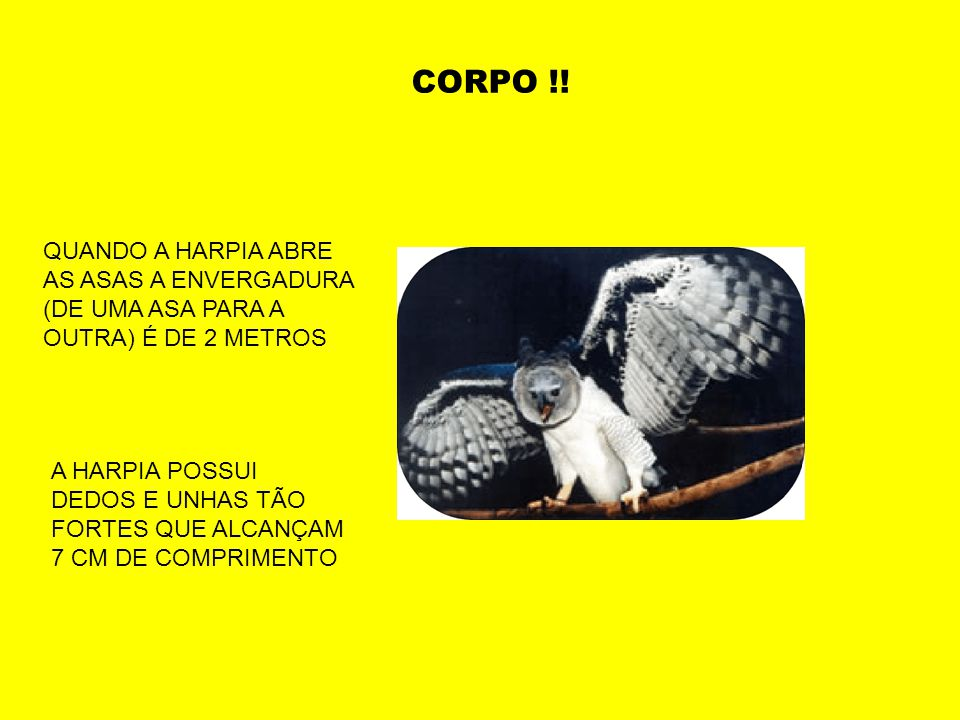 CORPO !! QUANDO A HARPIA ABRE AS ASAS A ENVERGADURA (DE UMA ASA PARA A OUTRA) É DE 2 METROS.
