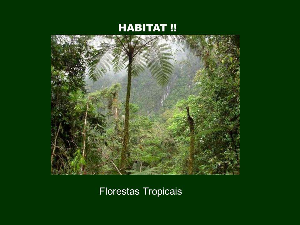 HABITAT !! Florestas Tropicais