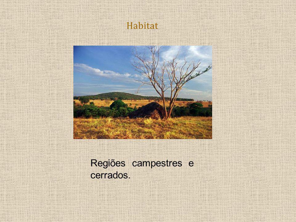 Habitat Regiões campestres e cerrados.