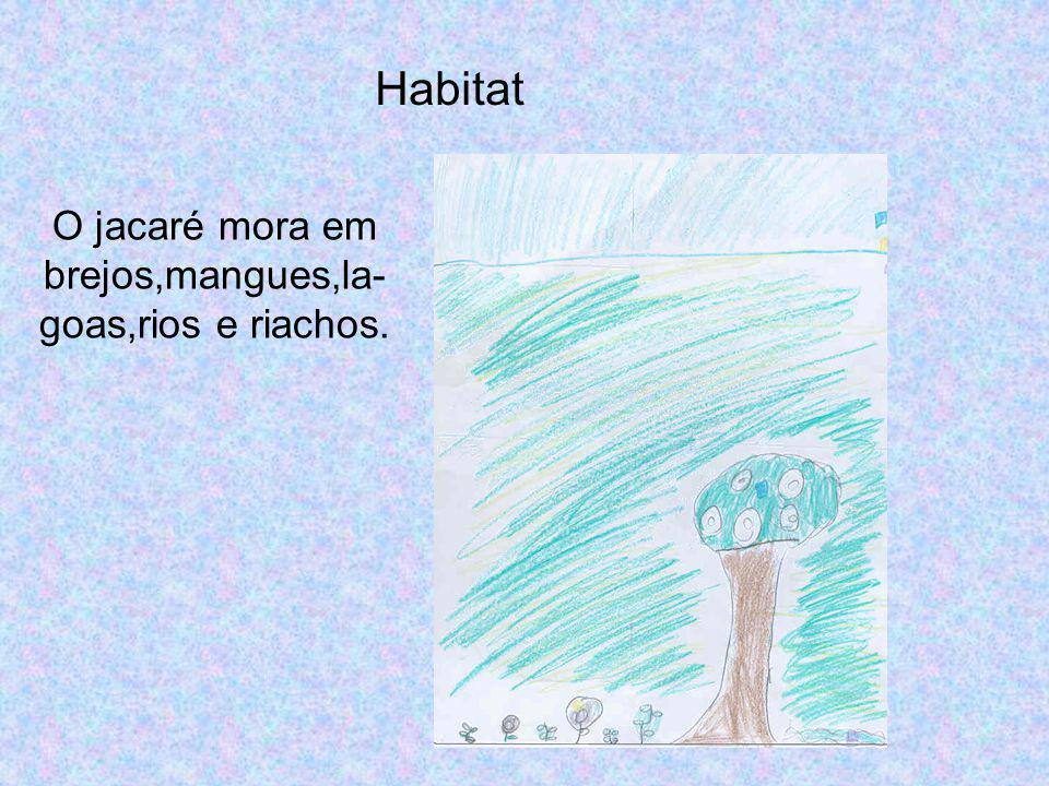 O jacaré mora em brejos,mangues,la-goas,rios e riachos.