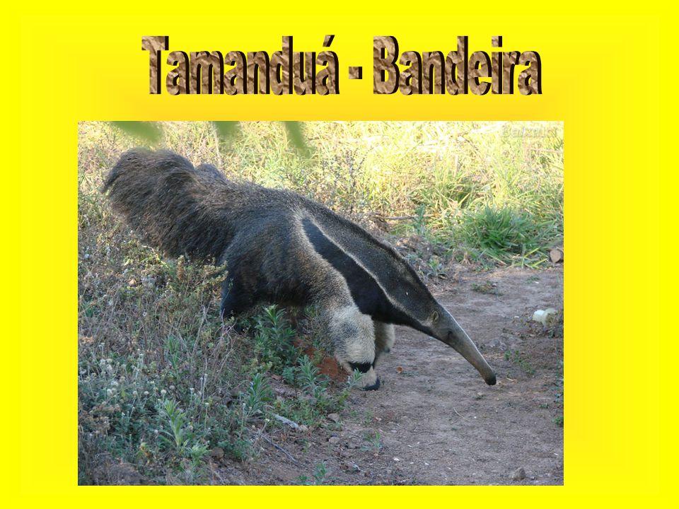 Tamanduá - Bandeira