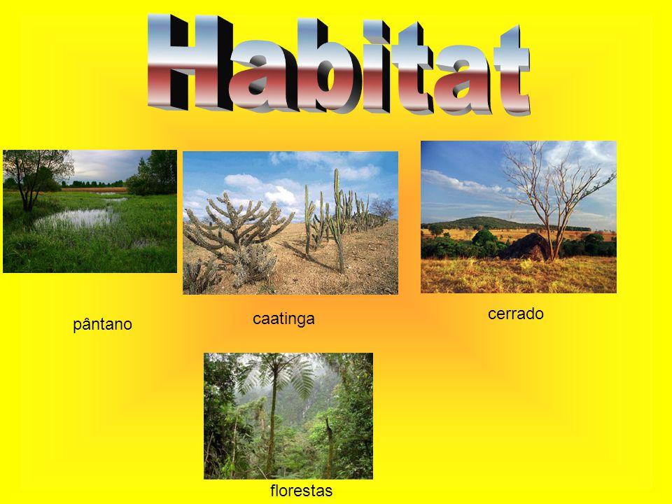 Habitat cerrado caatinga pântano florestas