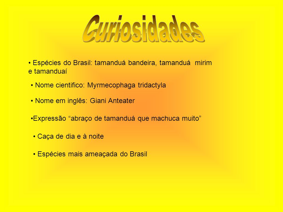 Curiosidades Espécies do Brasil: tamanduá bandeira, tamanduá mirim
