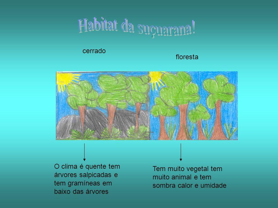 Habitat da suçuarana! cerrado floresta