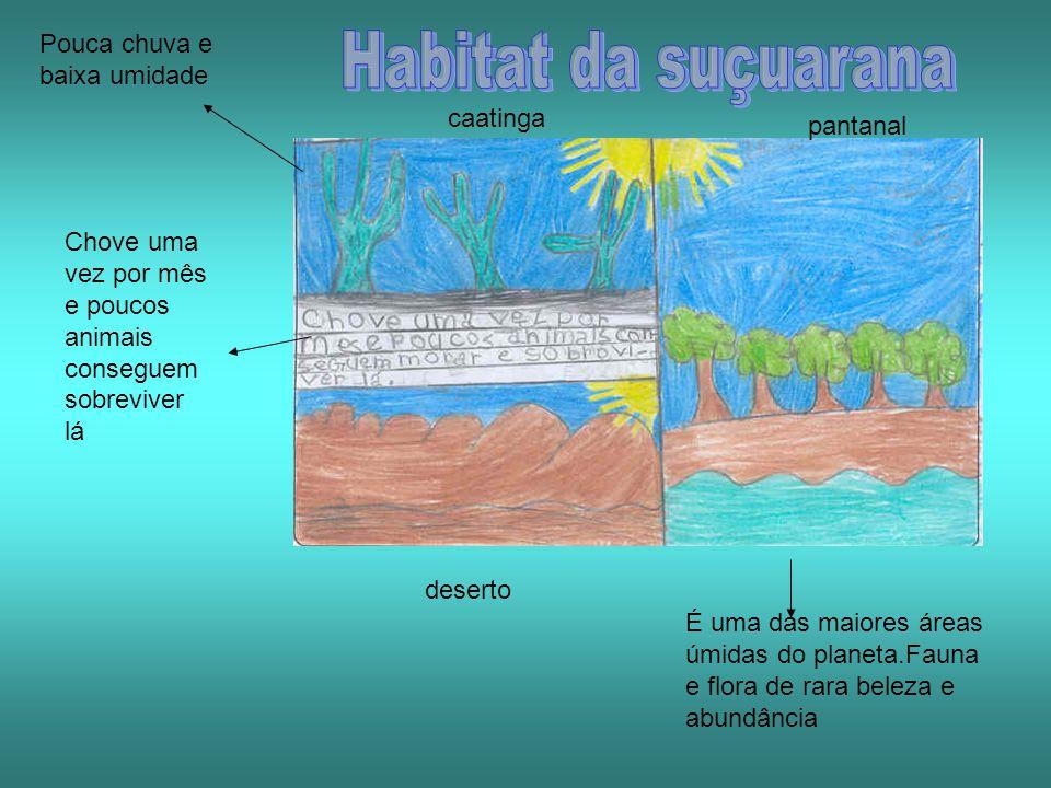 Habitat da suçuarana Pouca chuva e baixa umidade caatinga pantanal
