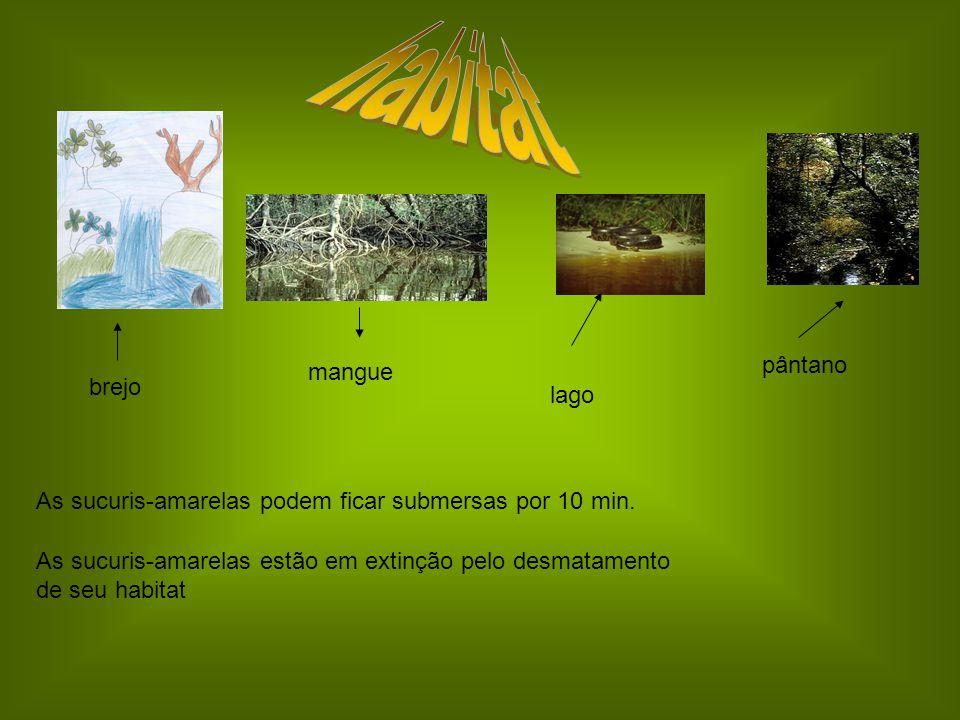 habitat pântano mangue brejo lago