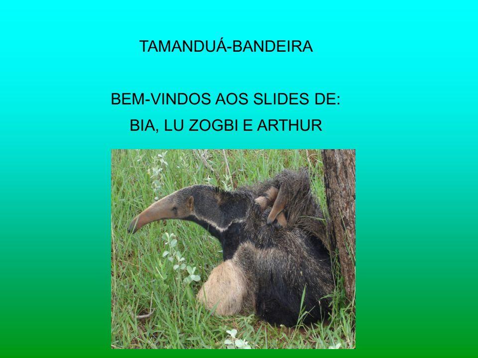 BEM-VINDOS AOS SLIDES DE: