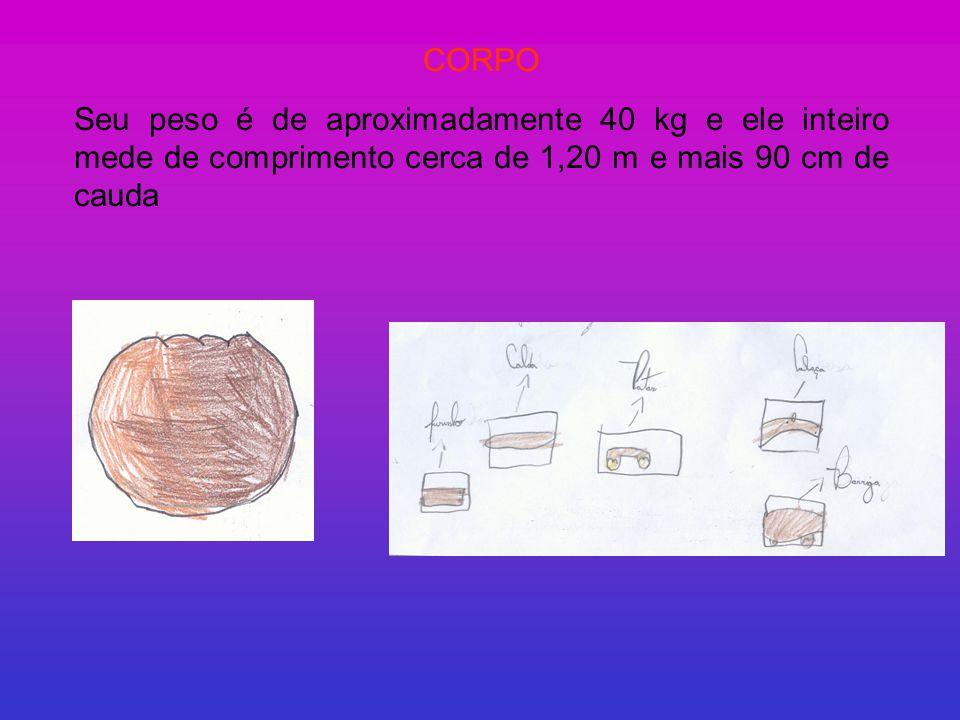 CORPO Seu peso é de aproximadamente 40 kg e ele inteiro mede de comprimento cerca de 1,20 m e mais 90 cm de cauda.