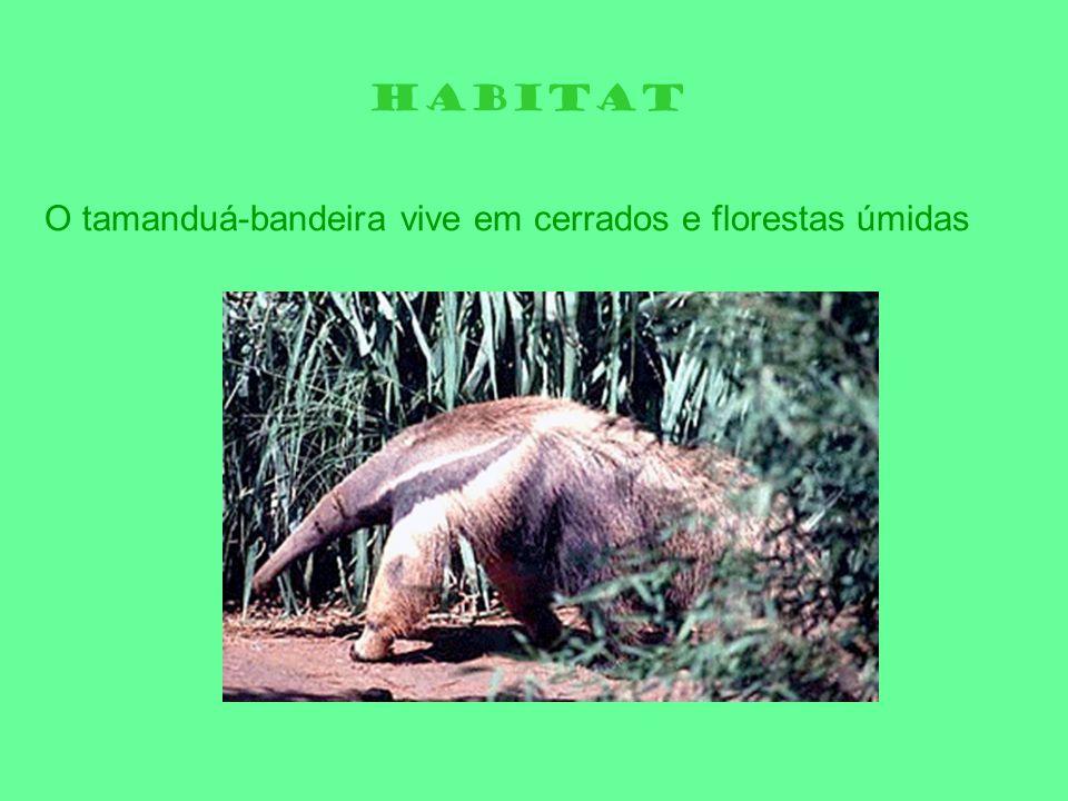 HABITAT O tamanduá-bandeira vive em cerrados e florestas úmidas