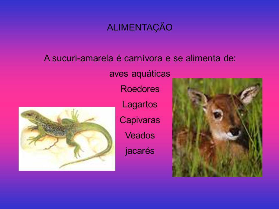 A sucuri-amarela é carnívora e se alimenta de: