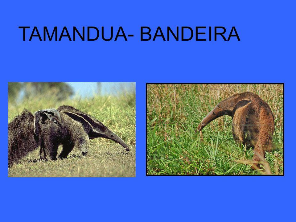 TAMANDUA- BANDEIRA