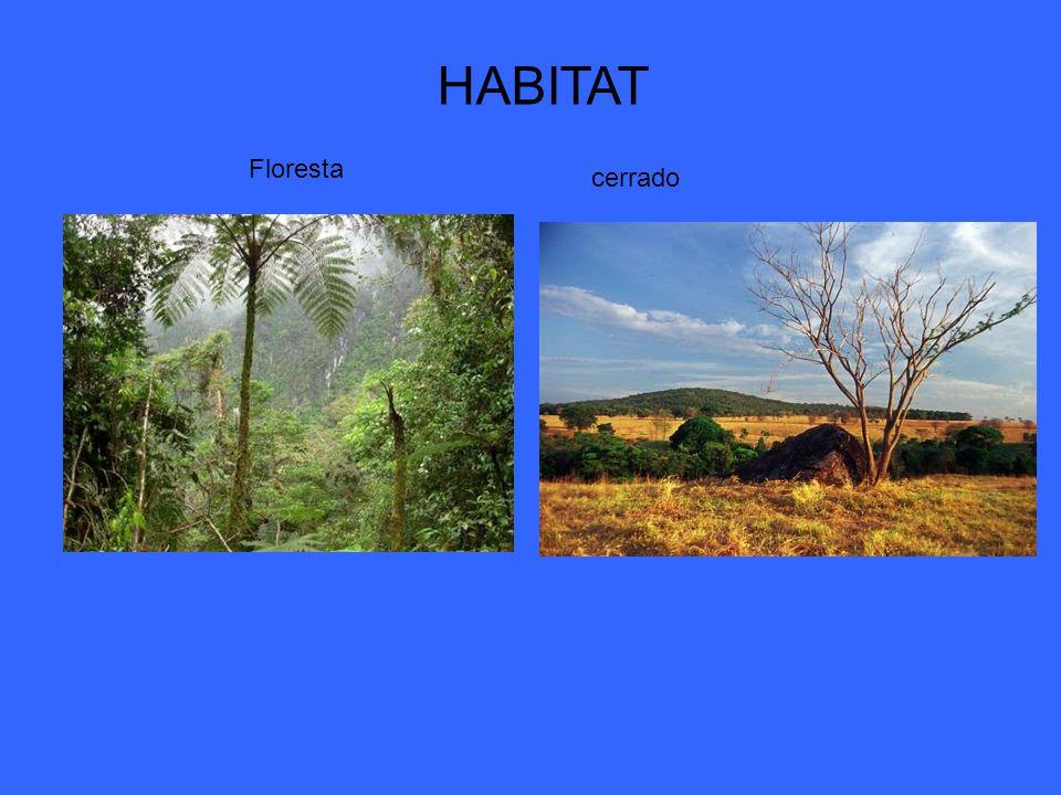 HABITAT Floresta cerrado Floresta