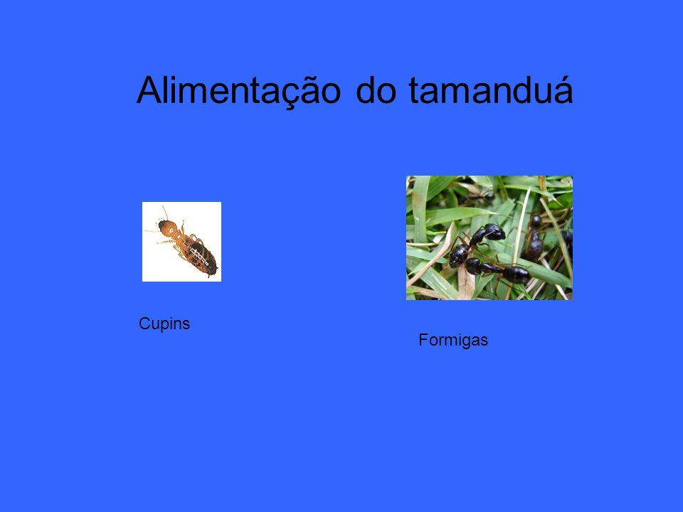 Alimentação do tamanduá