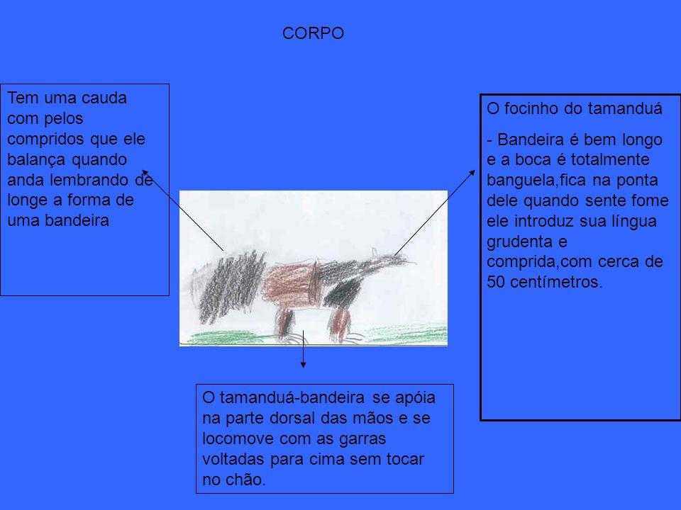 CORPO Tem uma cauda com pelos compridos que ele balança quando anda lembrando de longe a forma de uma bandeira.