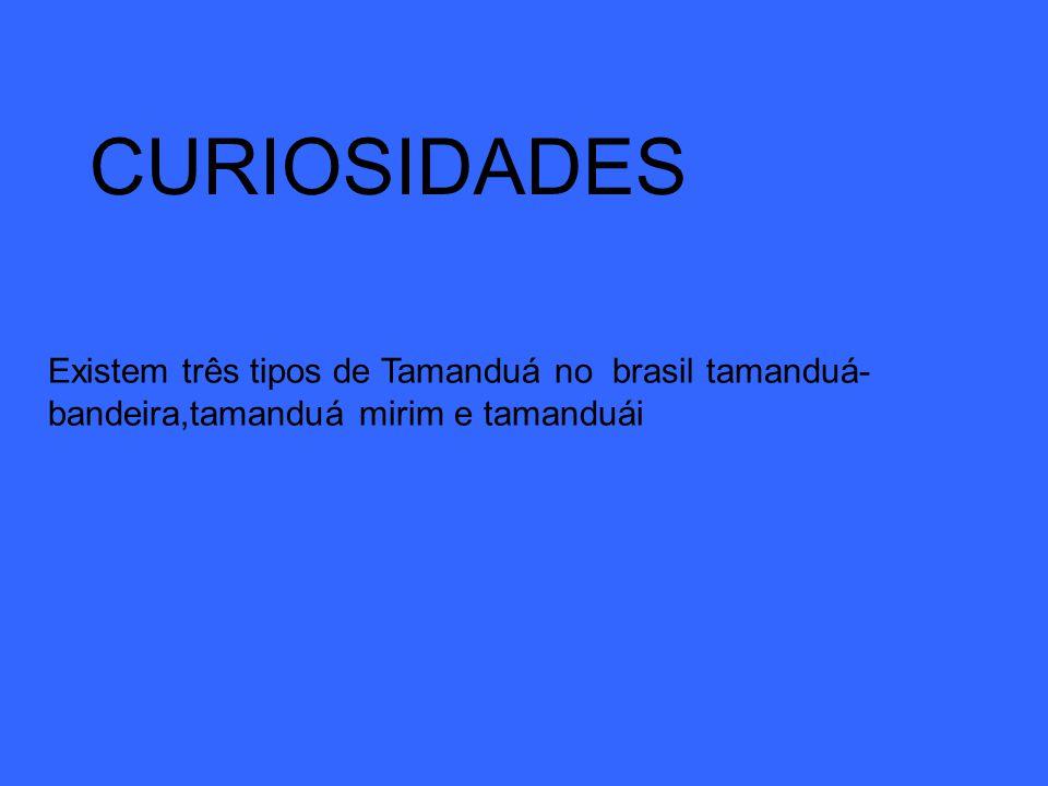 CURIOSIDADES Existem três tipos de Tamanduá no brasil tamanduá-bandeira,tamanduá mirim e tamanduái
