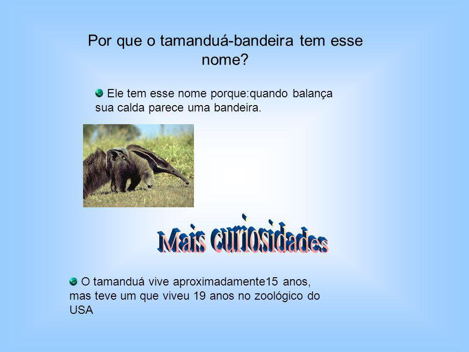Por que o tamanduá-bandeira tem esse nome