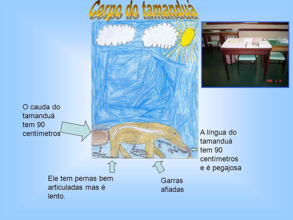 Corpo do tamanduá O cauda do tamanduá tem 90 centímetros