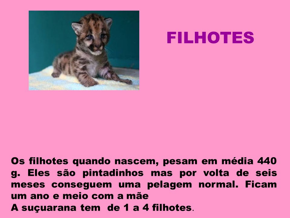 FILHOTES