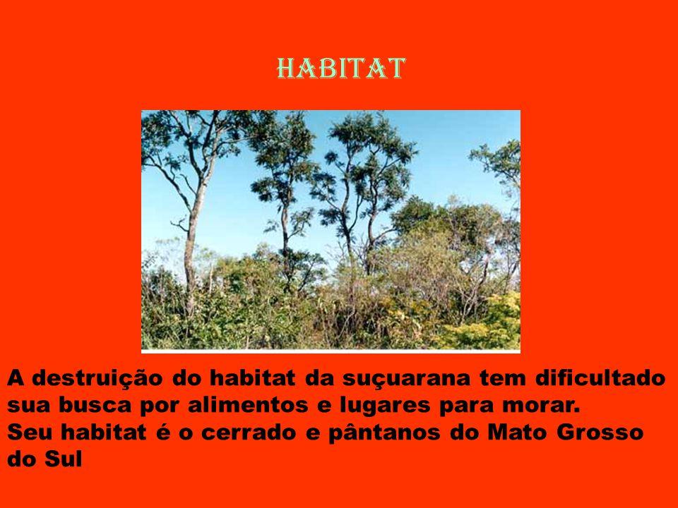 HABITAT A destruição do habitat da suçuarana tem dificultado sua busca por alimentos e lugares para morar.