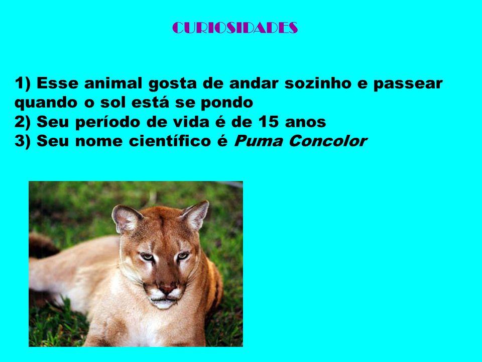 CURIOSIDADES 1) Esse animal gosta de andar sozinho e passear quando o sol está se pondo. 2) Seu período de vida é de 15 anos.
