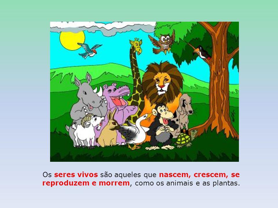 Os seres vivos são aqueles que nascem, crescem, se reproduzem e morrem, como os animais e as plantas.