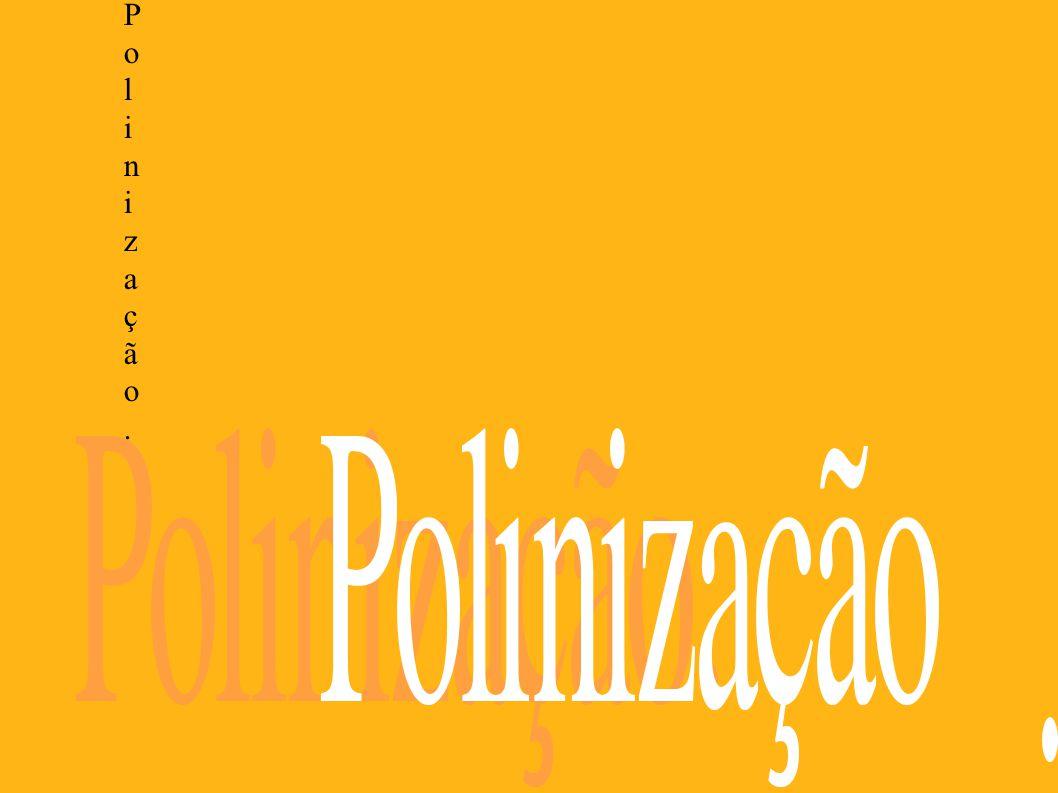 Polinização.