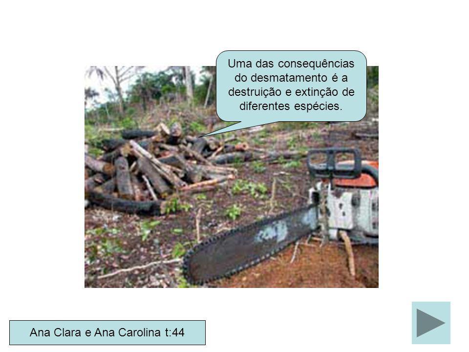 Ana Clara e Ana Carolina t:44