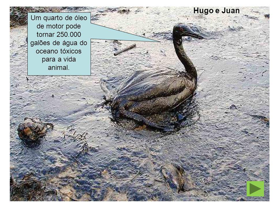 Hugo e Juan Um quarto de óleo de motor pode tornar 250.000 galões de água do oceano tóxicos para a vida animal.