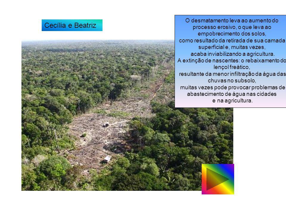 O desmatamento leva ao aumento do processo erosivo, o que leva ao empobrecimento dos solos,