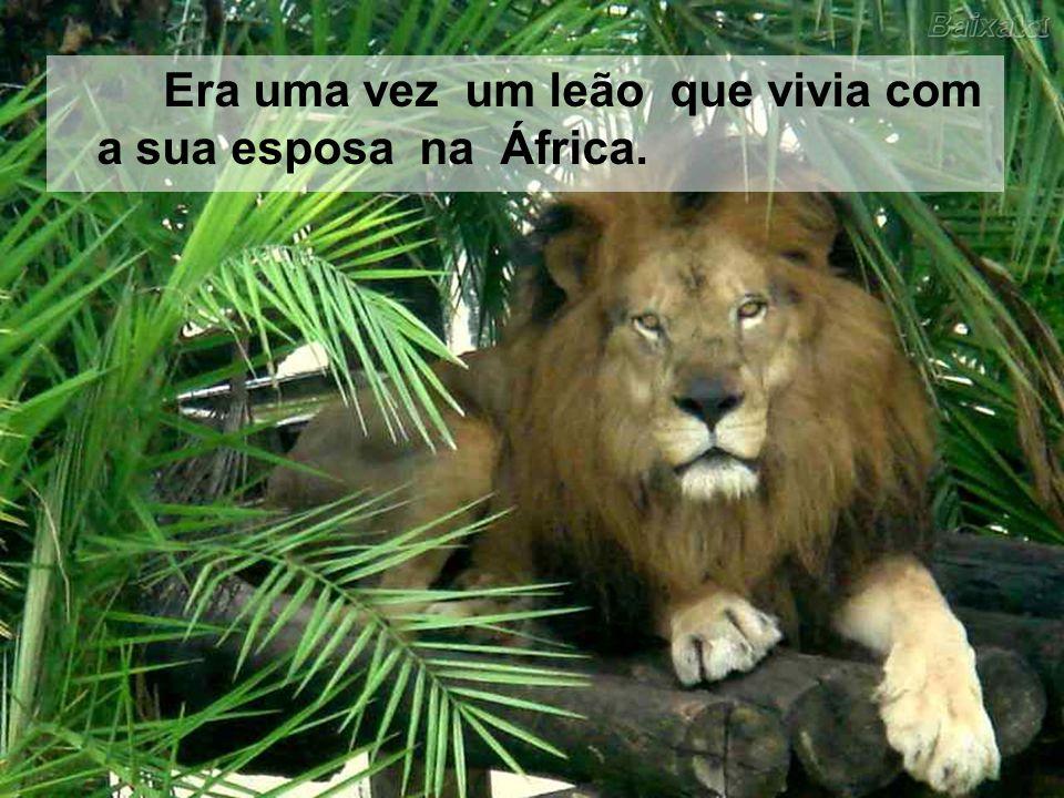 Era uma vez um leão que vivia com a sua esposa na África.